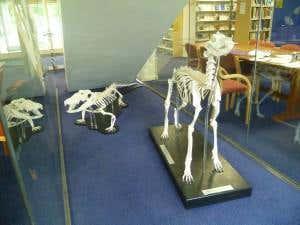 Skeleton mounting 1